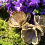 Eierkarton-Blumen Annefaktur.de