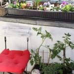hochbeet f r den balkon aus einer weinkiste selber bauen. Black Bedroom Furniture Sets. Home Design Ideas