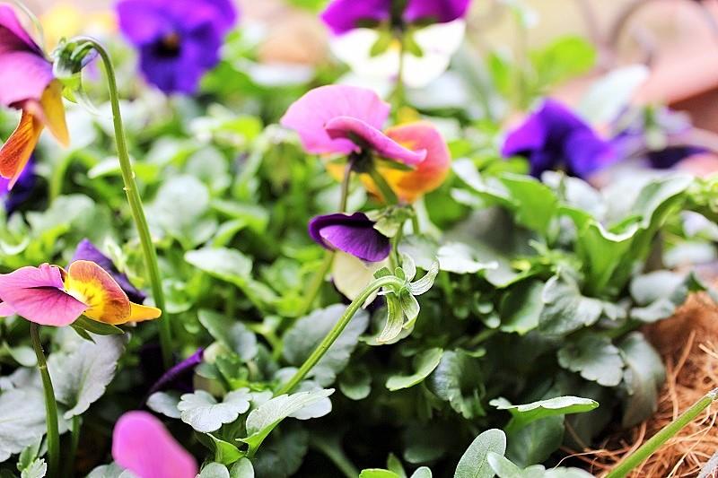 Frühlings-Blumen Balkon-Deko Annefaktur.