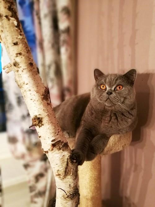 Weltkatzentag Annefaktur.de