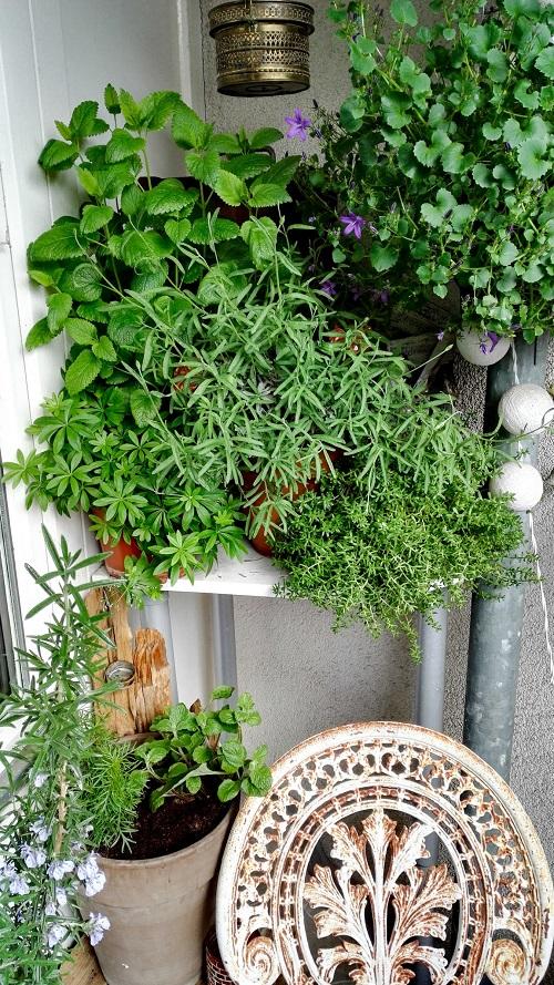 Balkonbepflanzung Annefaktur.de